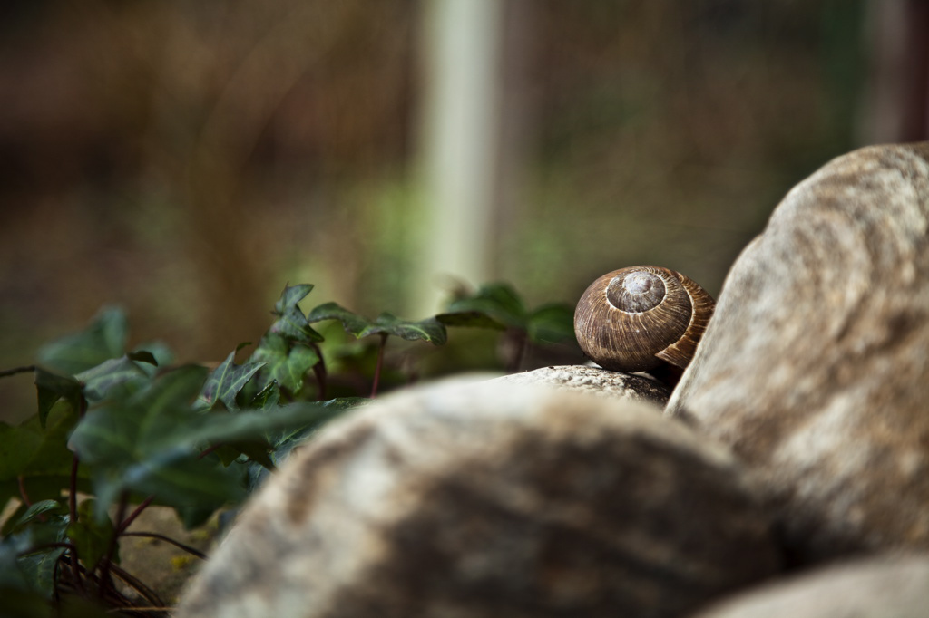 Silence, Snail and Stones
