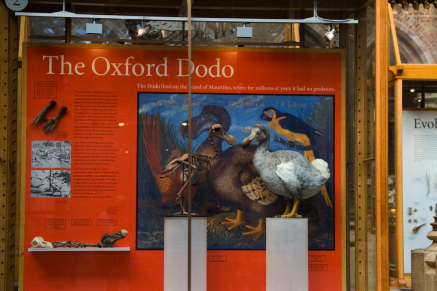 """Oxford Pitt Rivers Museum"""