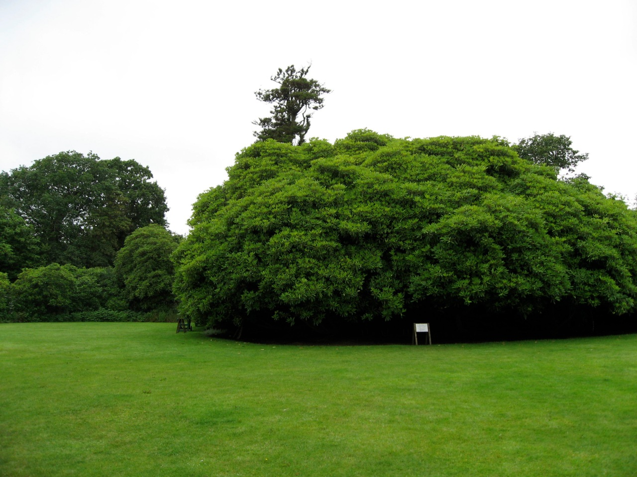 Garden of Heligan Cornwall
