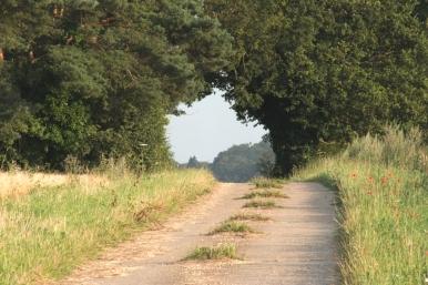 Norfolk Solitude