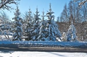 Winter 2015_1