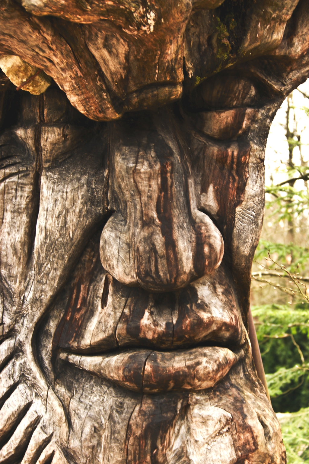 Faces in (the) Wood