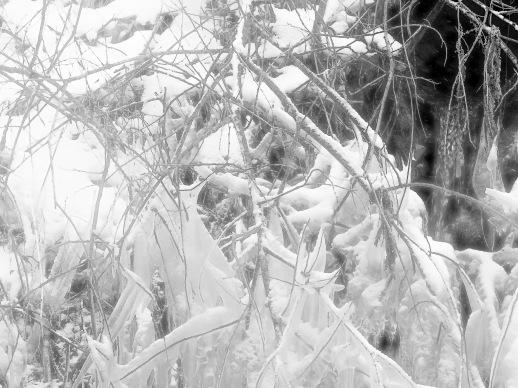 Winter _2018_11