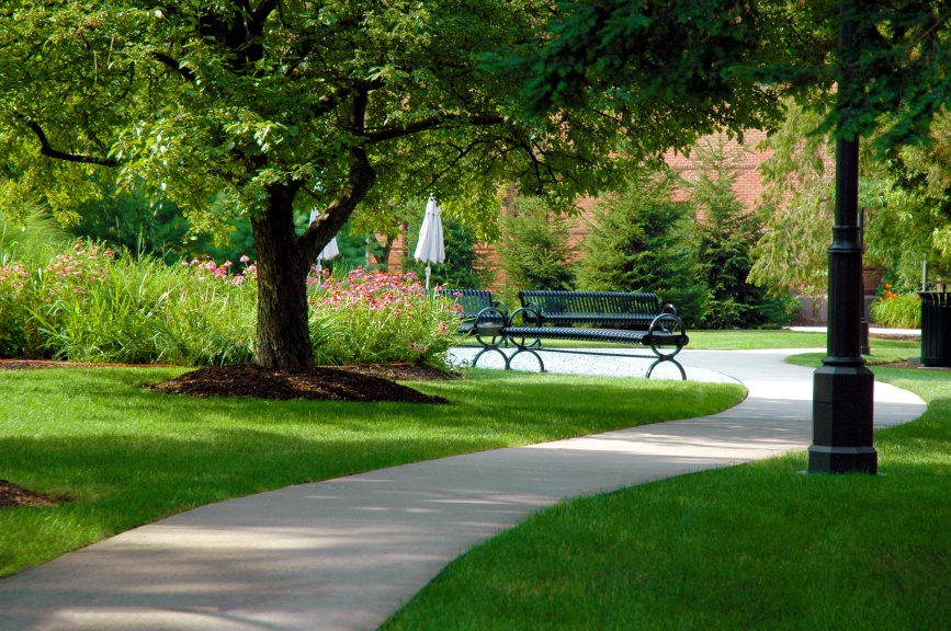 landscape-management-benches-on-a-tree-lined-path